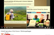 AVA-banned-vegetable-from-cameron-highland